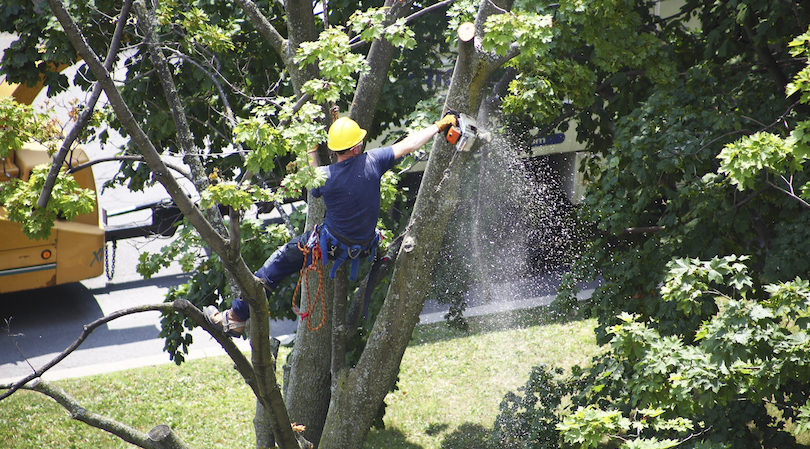 Tree Planting and Removal