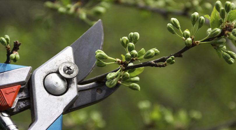Tree & Plant Pruning